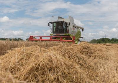 Wetter macht Bauern zu schaffen - Ausblick auf Ernte