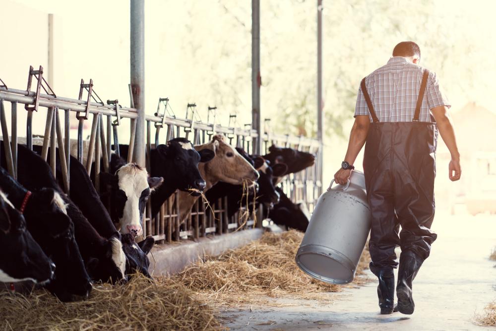 Studie zeigt: Milchkühen in Deutschland geht es oft schlecht