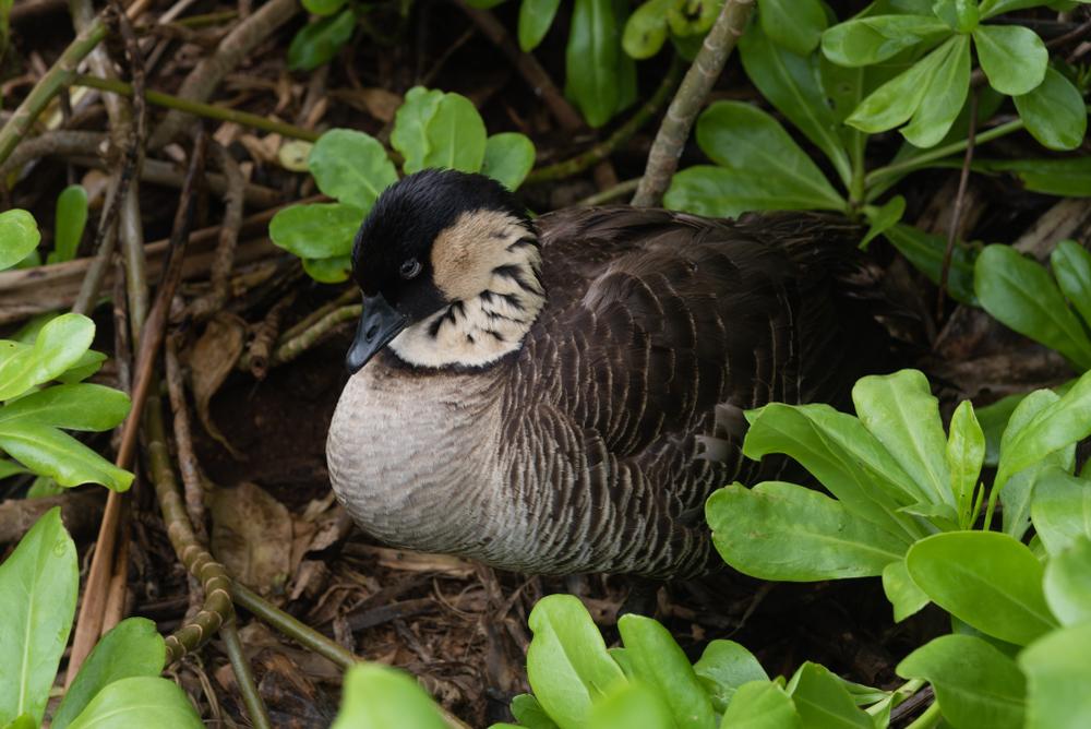 Nach Verdachtsfall: Vogelgrippe bei Gans in Vogelpark nachgewiesen