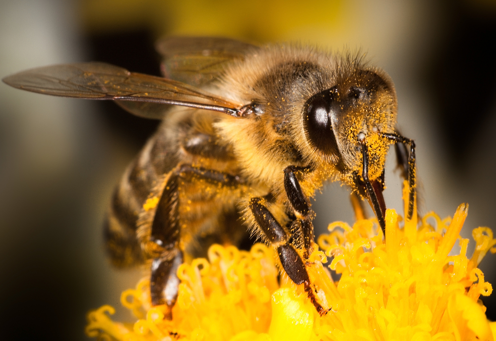 Strengere Vorgaben für Bauern zum Schutz von Insekten