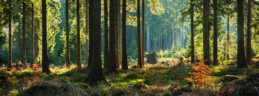 Der Drang nach draußen bringt Probleme für den Wald