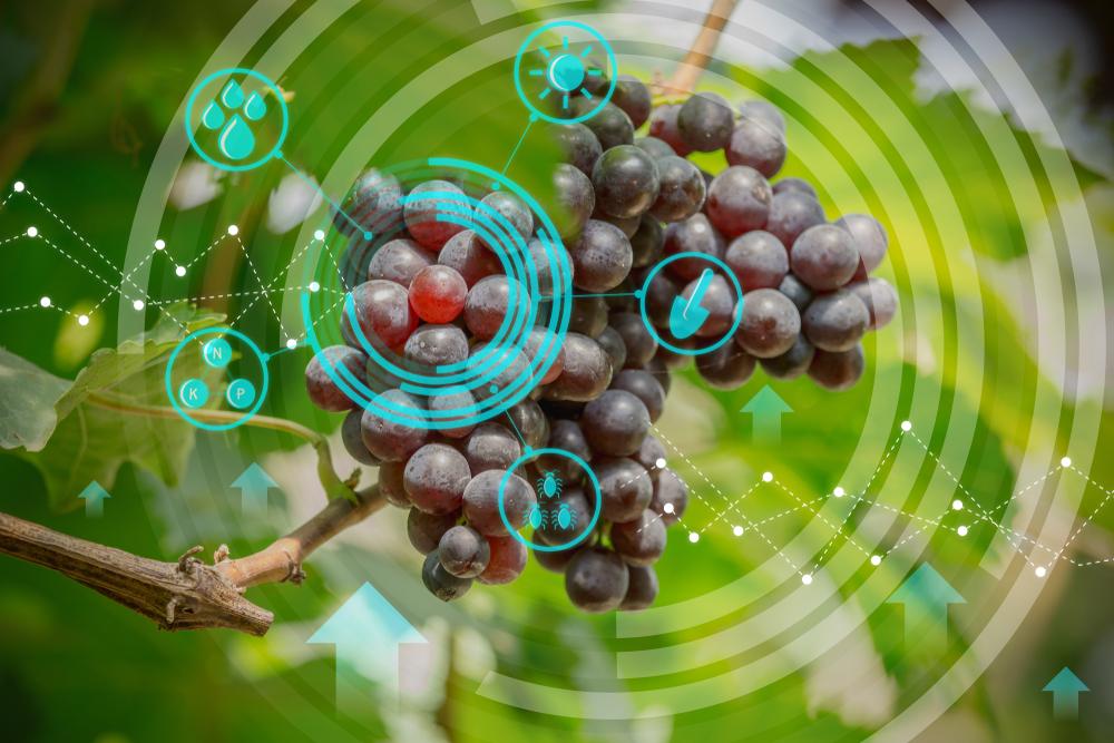 Mehr Digitalisierung im Weinbau