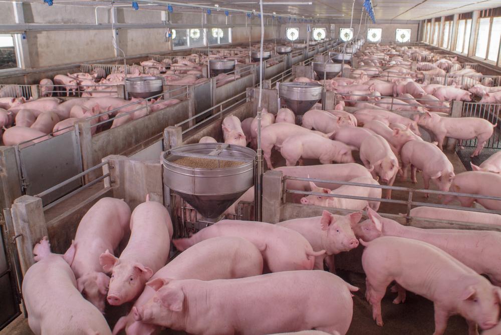 Nach Brand in Alt Tellin - Aus für «Tierfabriken» gefordert