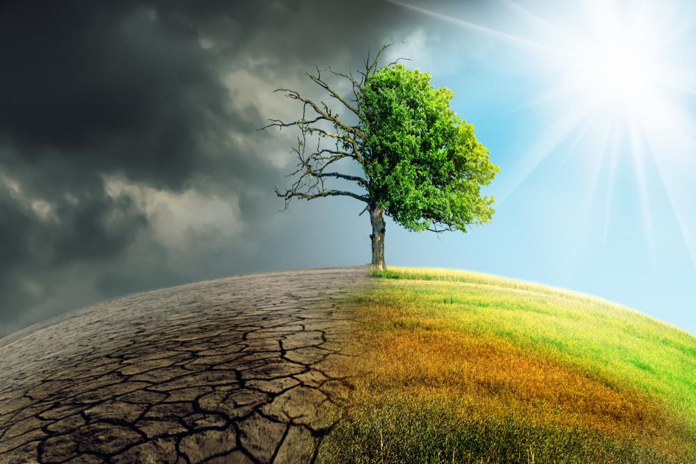 Grüne: Landwirte brauchen beim Klimawandel Unterstützung