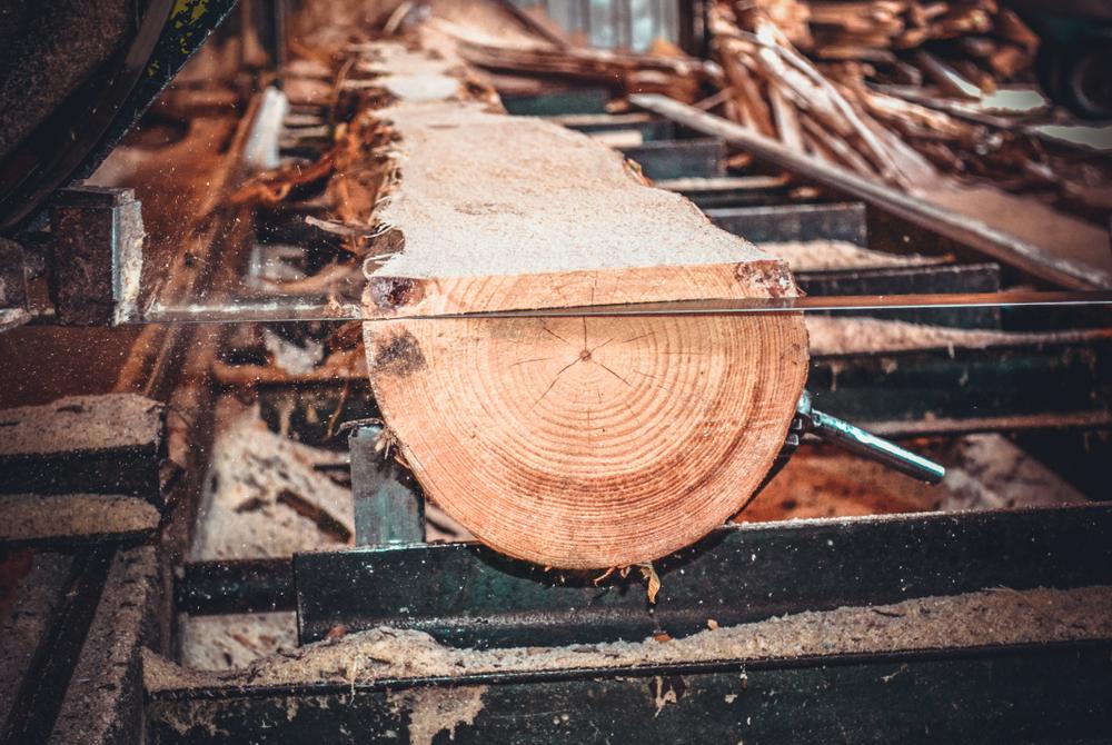 NRW-Umweltministerin: Sägewerke sollen mehr für Holz zahlen