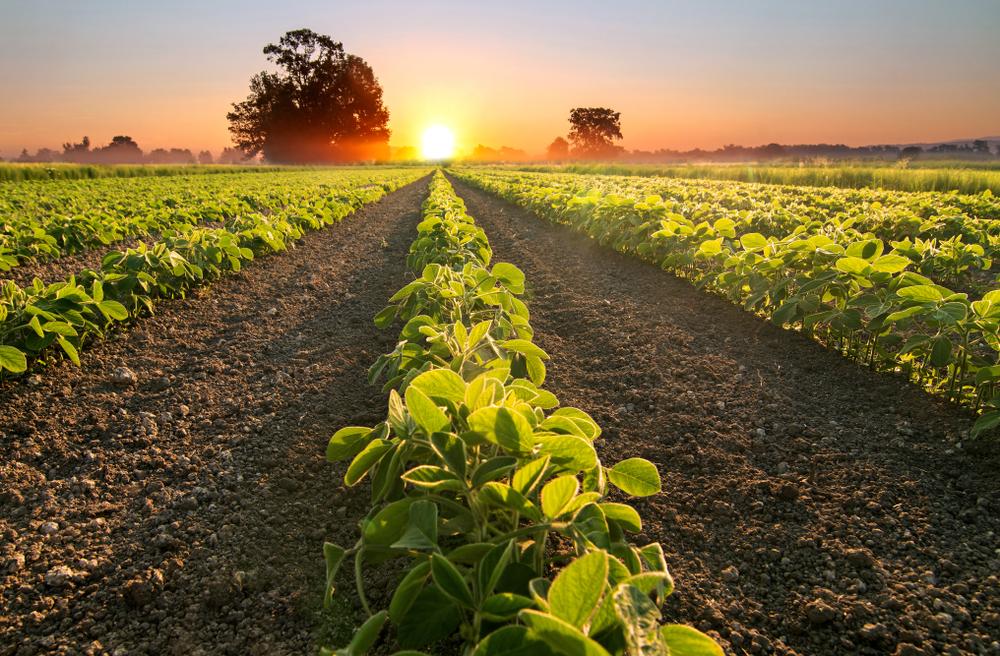 Macron will mehr Soja-Anbau in Europa zum Schutz des Amazonas