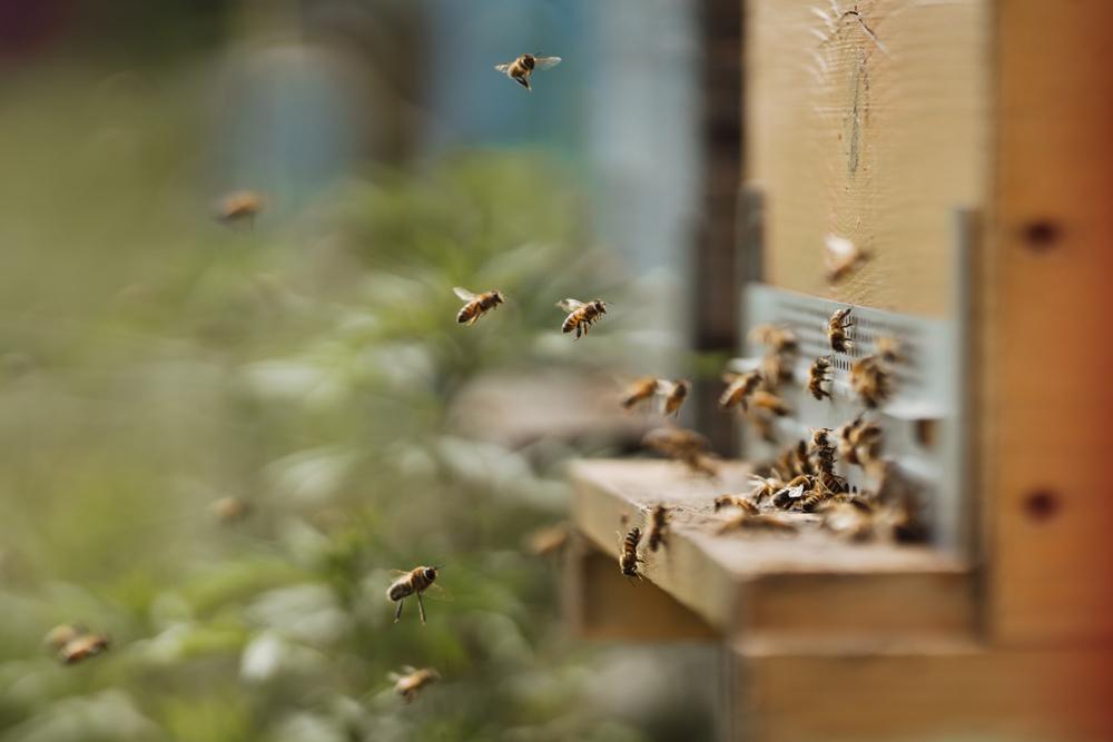 Regen vermasselt den Imkern ihre Honigernte