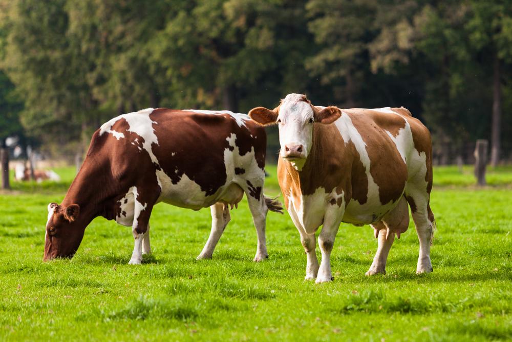 Connemann/Stegemann: Nothilfen für krisengeschüttelte Nutztierhalter