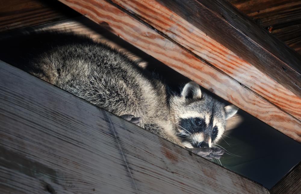 Ministerium will nicht-heimische Tierarten stärker bekämpfen