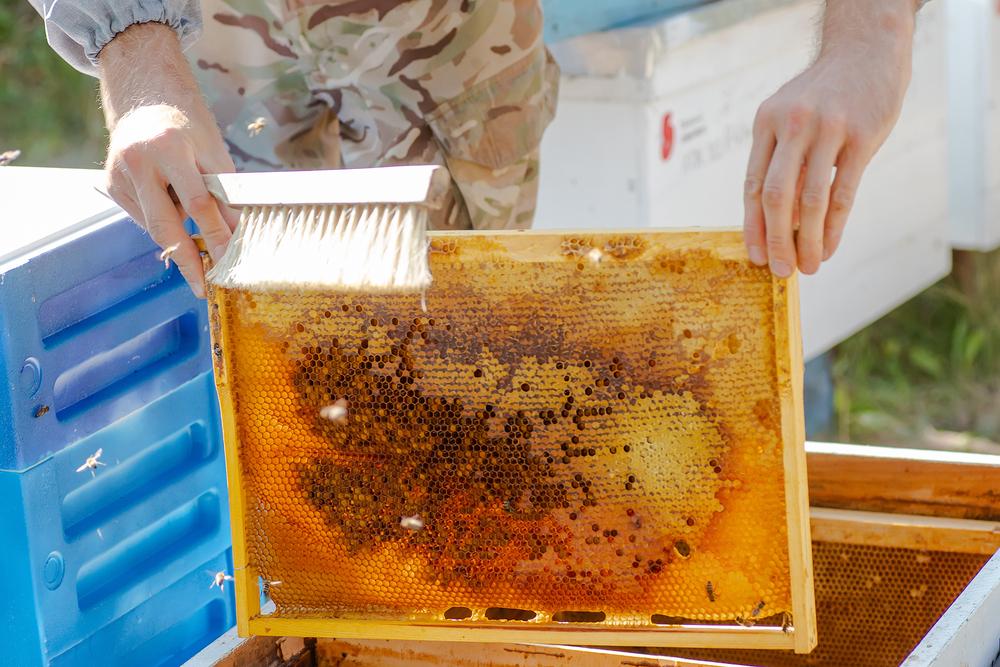 Imker in Rheinland-Pfalz zufrieden mit Honigernte