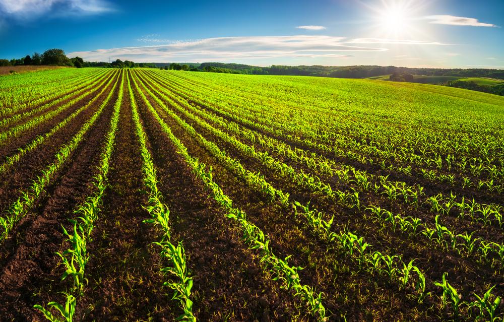 Zwölf Prozent der Agrarfläche in MV biologisch bewirtschaftet