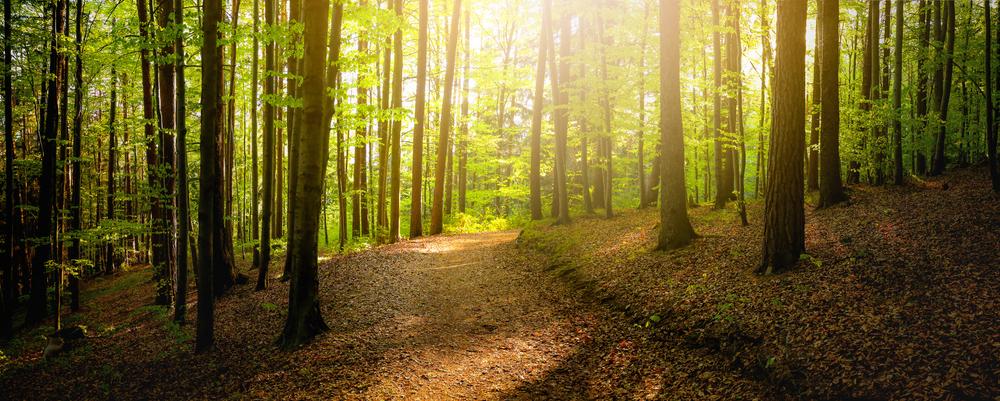 Programm startet: Eine halbe Milliarde Unterstützung für Waldbesitzer