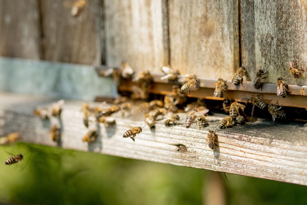 Agrarministerin Klöckner besucht Bienenschutzinstitut