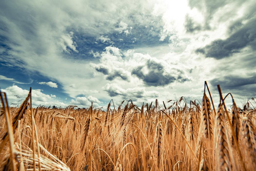 Roggen für die Toast-Nation: Deutsches Brot in Großbritannien