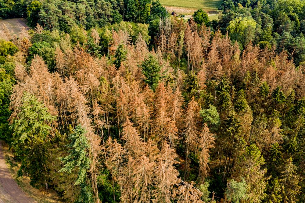 Wälder in Sachsen-Anhalt leiden weiterhin unter Trockenheit