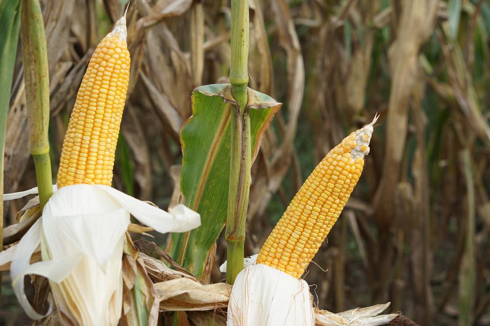 Argentinische Bauern protestieren gegen Exportbeschränkungen