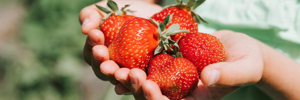 Gut ein Drittel weniger Erdbeeren im Freiland geerntet