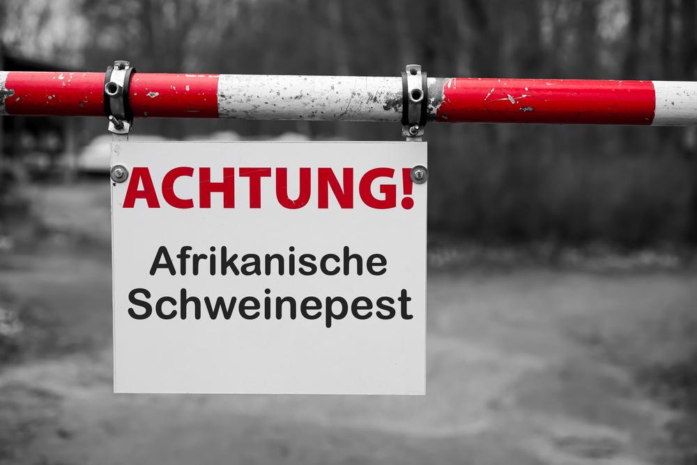 Afrikanische Schweinepest: Zwei weitere Fälle in Sachsen