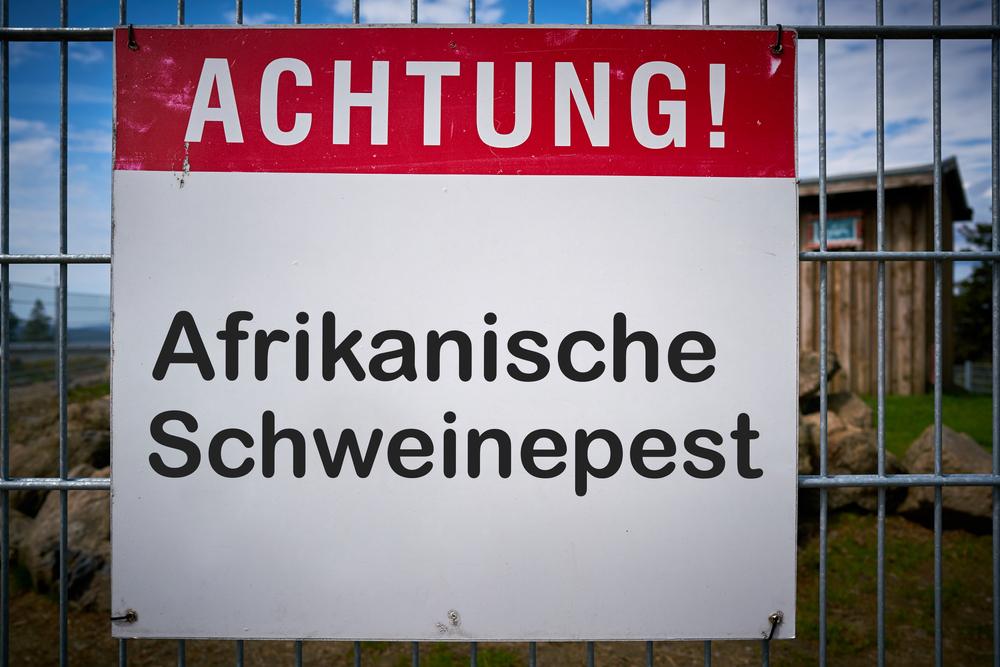 Mecklenburg-Vorpommern baut zweiten Schweinpest-Zaun an Polens Grenze