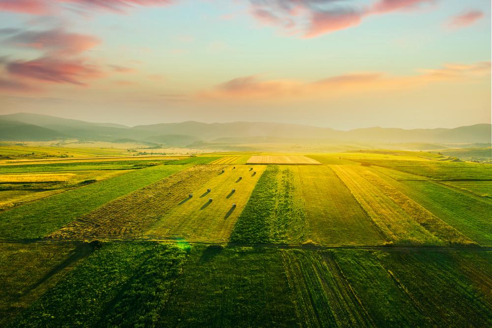 Folge der Klima-Krise: Weniger nutzbare Fläche für die Landwirtschaft