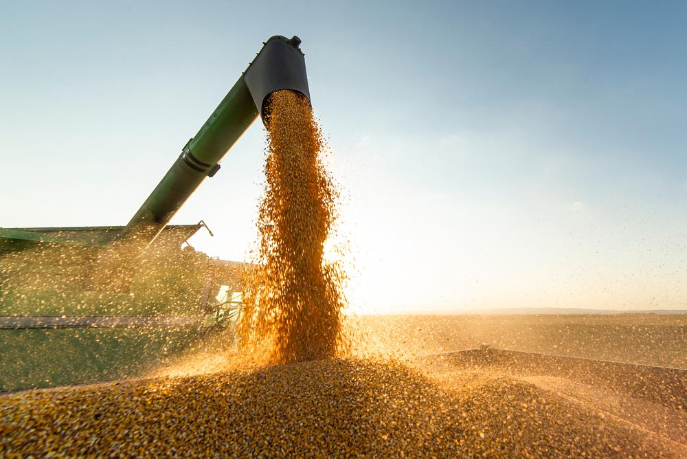 Schlechte Bilanz bei Getreideernte in Bayern