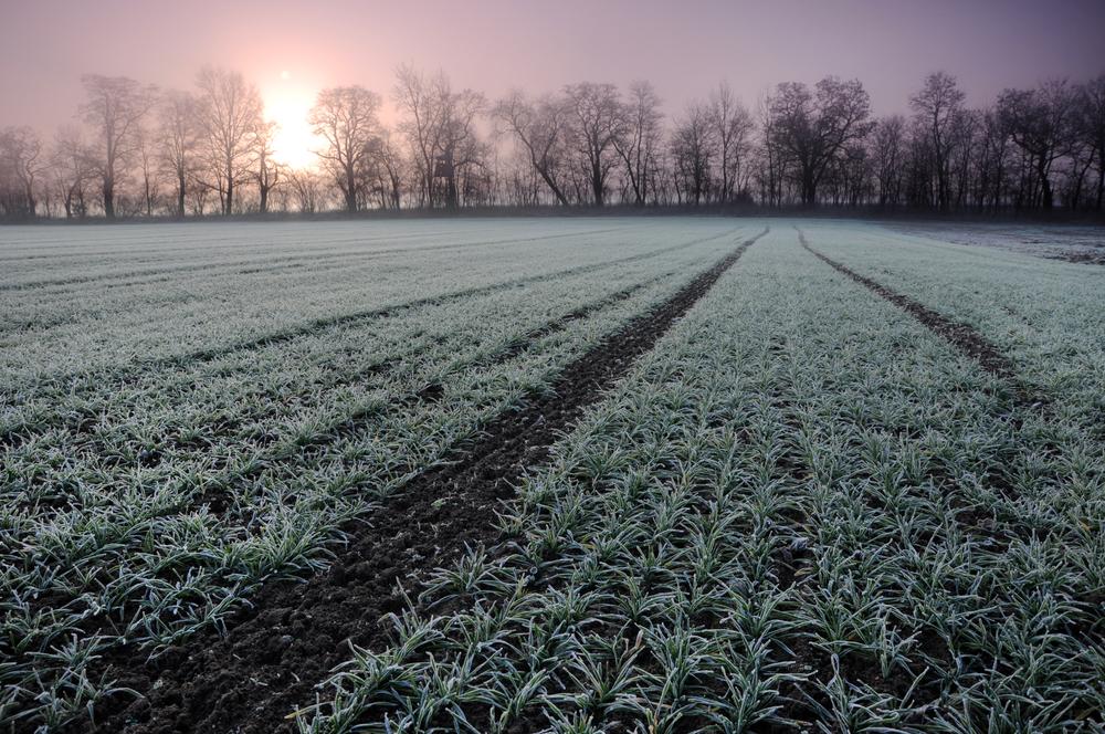 Milliarden-Hilfe für Frankreichs Landwirte nach Frostperiode