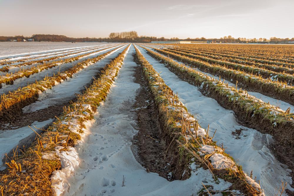 Winterwetter im April bremst Nachfrage nach Spargel