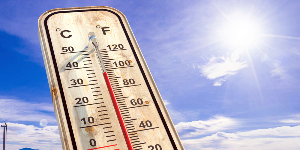 Hitzestress belastet Schweine, Rinder und Geflügel