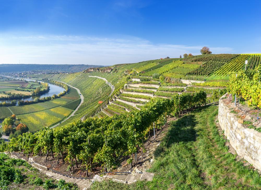 Landwirtschaftskammer erwartet steigende Zahl an Weinbaubetrieben