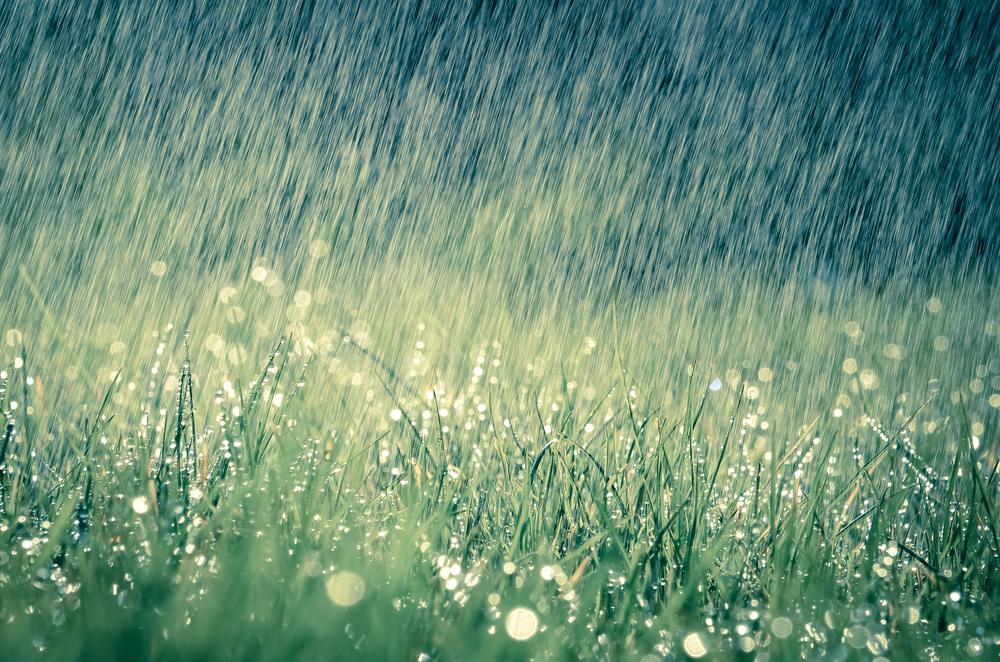 Bauern in Rheinland-Pfalz freuen sich nur teilweise über Regenfälle