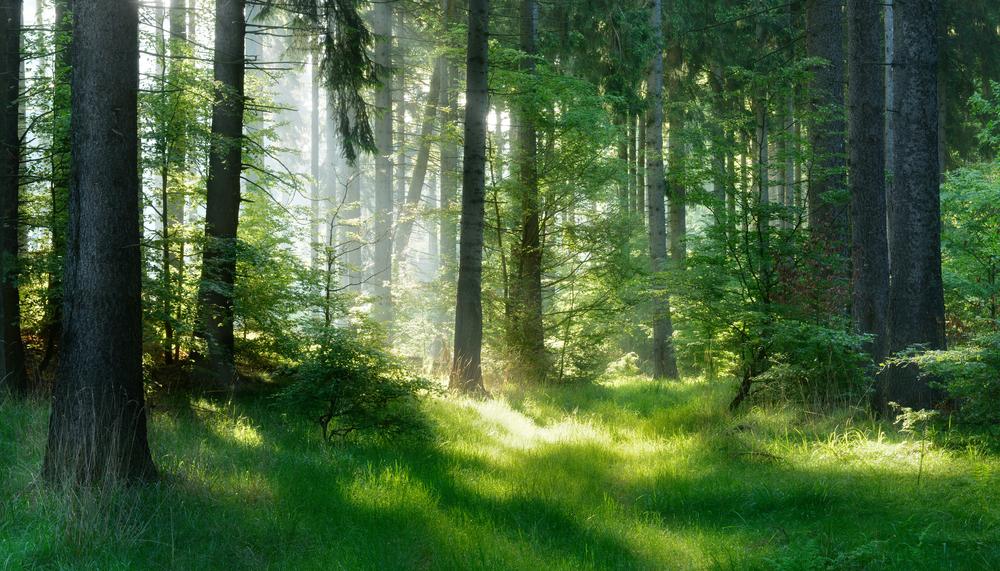 Rekord-Förderung - Land steckt 15 Millionen Euro in den Wald