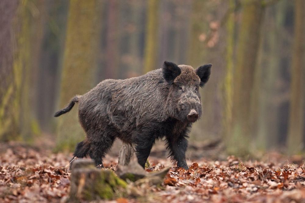 Jagdverband: Wildfleischpreise im Südwesten gut