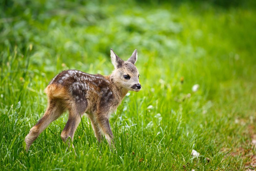 Jäger und Bauern gemeinsam gegen den Mähtod von Jungtieren