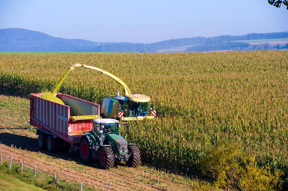 Wetter fuehrt in Niedersachsen zu verzoegerter Maisernte