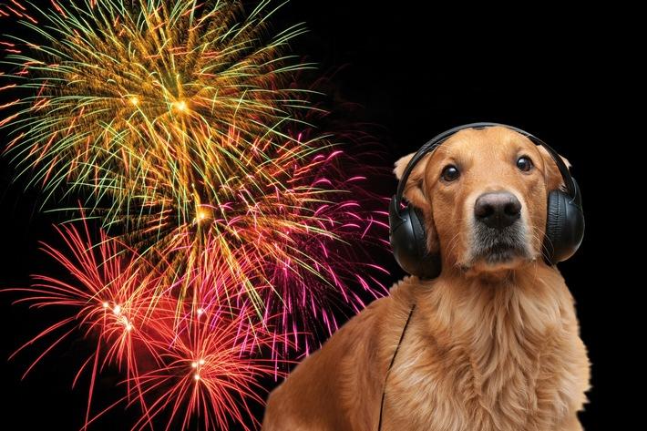 Tierische Angst vorm Feuerwerk / Lärmphobien bei Hund und Katze sind keine Seltenheit / Tierhalter können ihren Lieblingen in diesen schweren Stunden beistehen